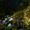 Flora in the Santa Cruz Valley